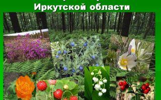 Природа, растения и животные иркутской области